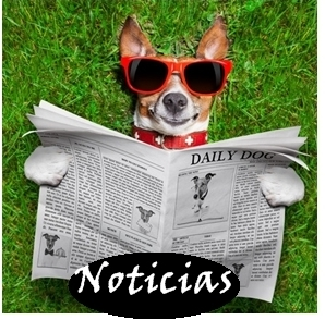 Noticias1